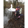 Our very own swan lake!
