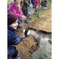Goats- Pygmy goats.