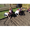 We enjoyed planting  bulbs