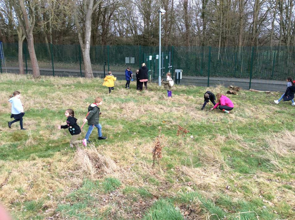 We planted Dog Rose, Rowan and Elder trees.