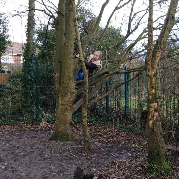 The famous climbing tree.