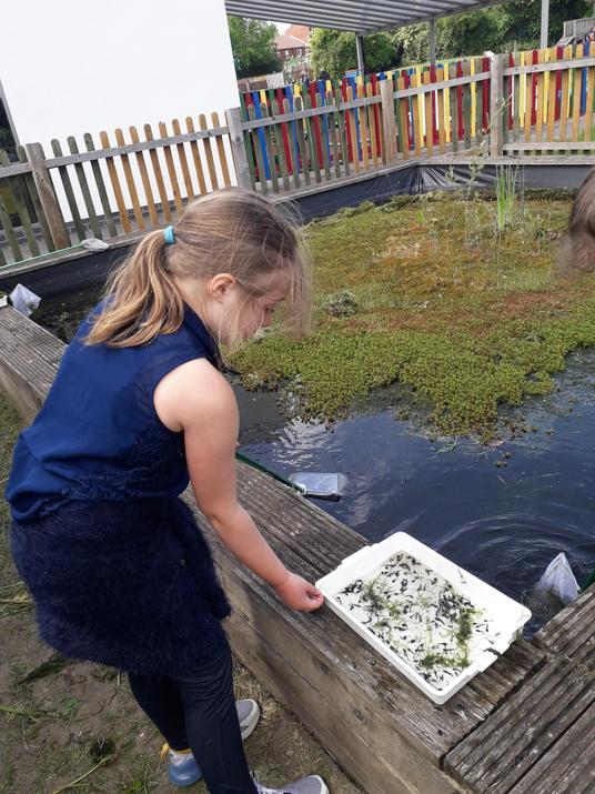 Connie has been pond dipping at school!