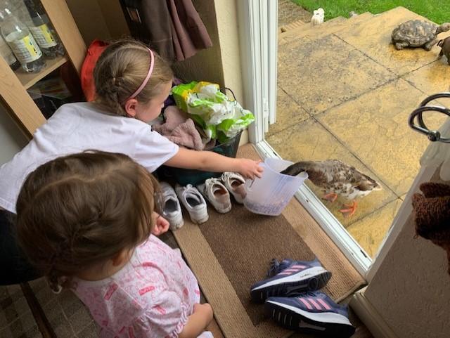 Emmy feeding ducks at her Grandad's house.
