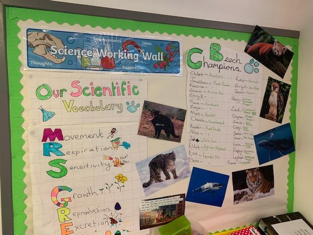 The children in Beech Class have chosen an endangered animal to champion!