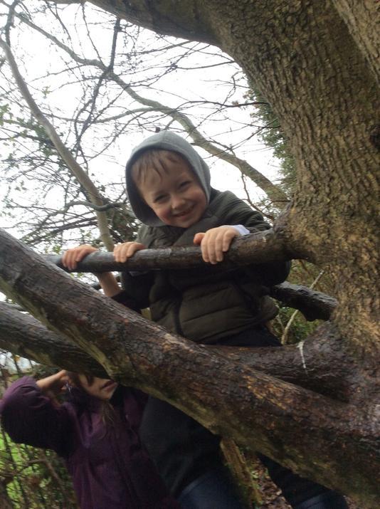Climbing the safe tree,