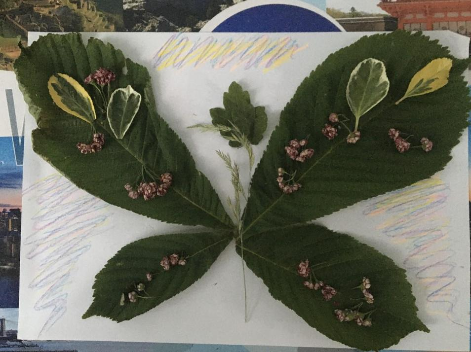 Lovely leaf butterfly Jakub.