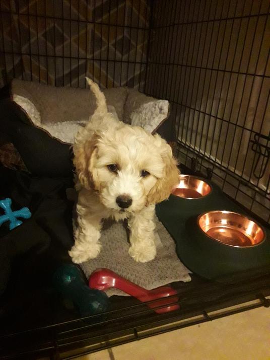 Miss Pretty's new puppy called Bert.