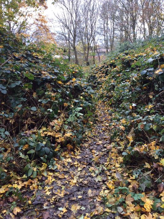 We used the secateurs and loppers to make a path