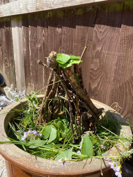 What a stunning bug house from Michael.