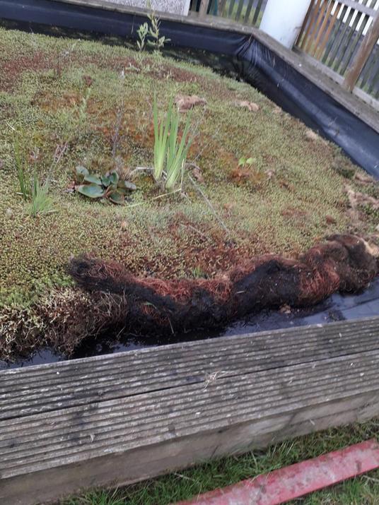 The overgrown school pond.