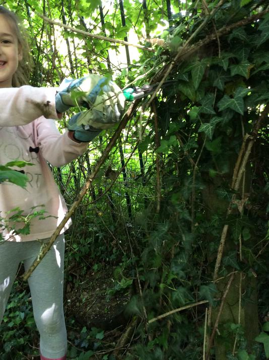 Pruning the brambles.