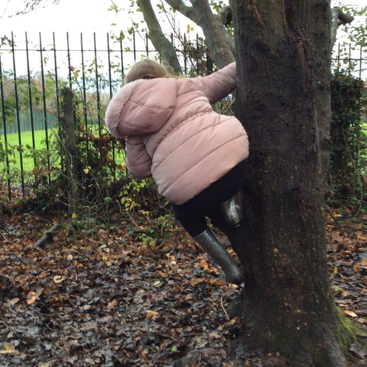 Bob the climbing tree!