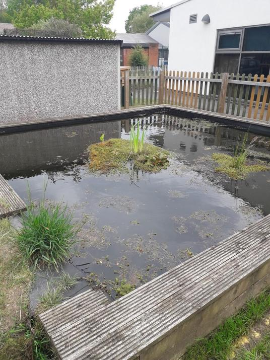 My job was to clear the pond for the 38 frogs!