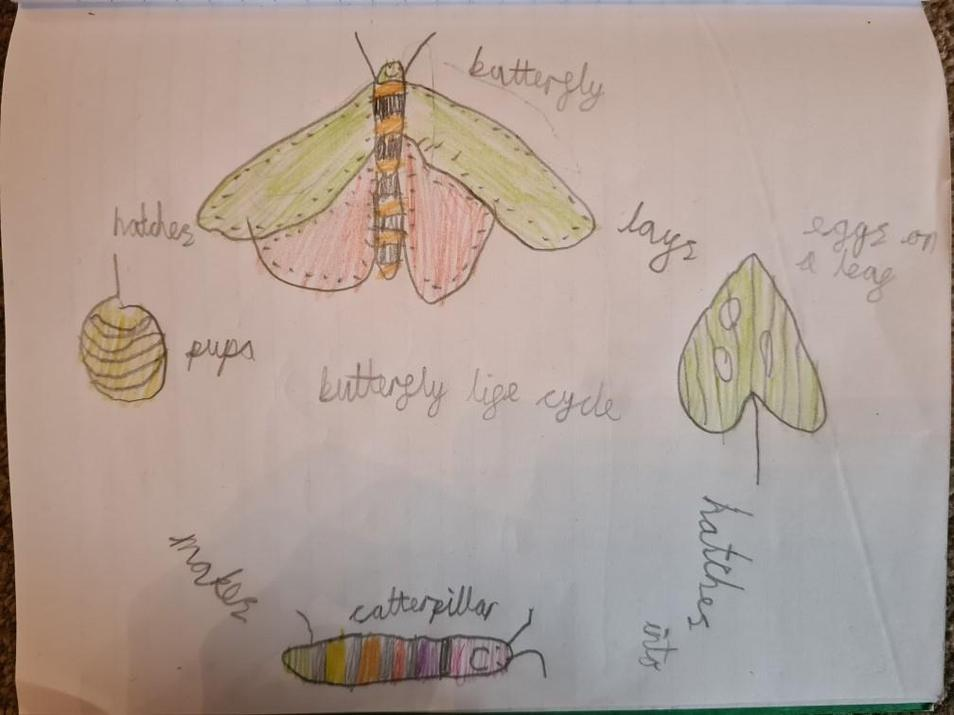 Michael's butterfly life cycle.