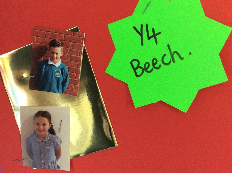 Y4 BEECH