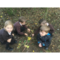 Making Andy Goldsworthy pictures in the forest