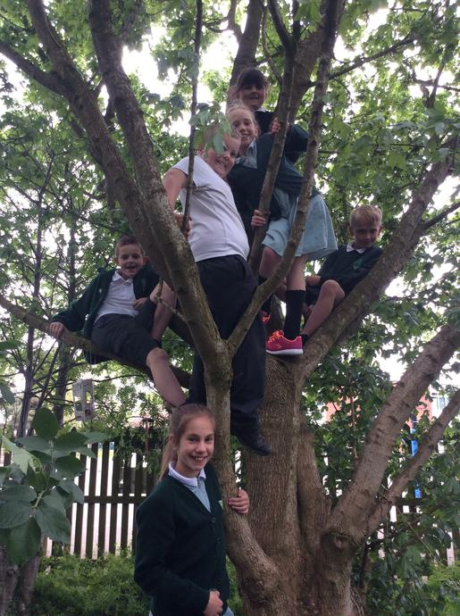 Year 5s enjoying forest schools with Mrs Millman