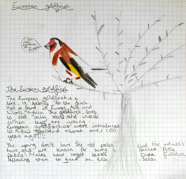 Goldfinch fact sheet by Grace