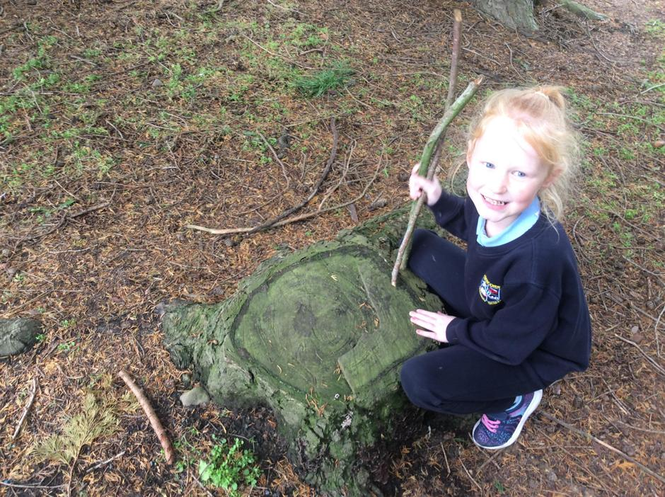 Counting rings to find out the age of the tree stump