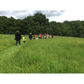 Finding minibeasts in the meadow