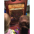 Learning about bumble bees and their habitat