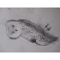 Using charcoal in Art