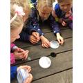 Examining moths