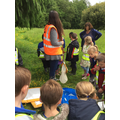 Finding minibeasts in the trees