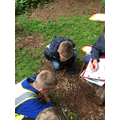Searching for minibeasts under logs