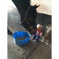 Feeding Lottie