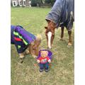 Feeding the ponies