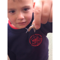 Matthew was fascinated by this snail!