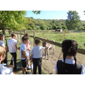 Visiting the donkeys on our village walk