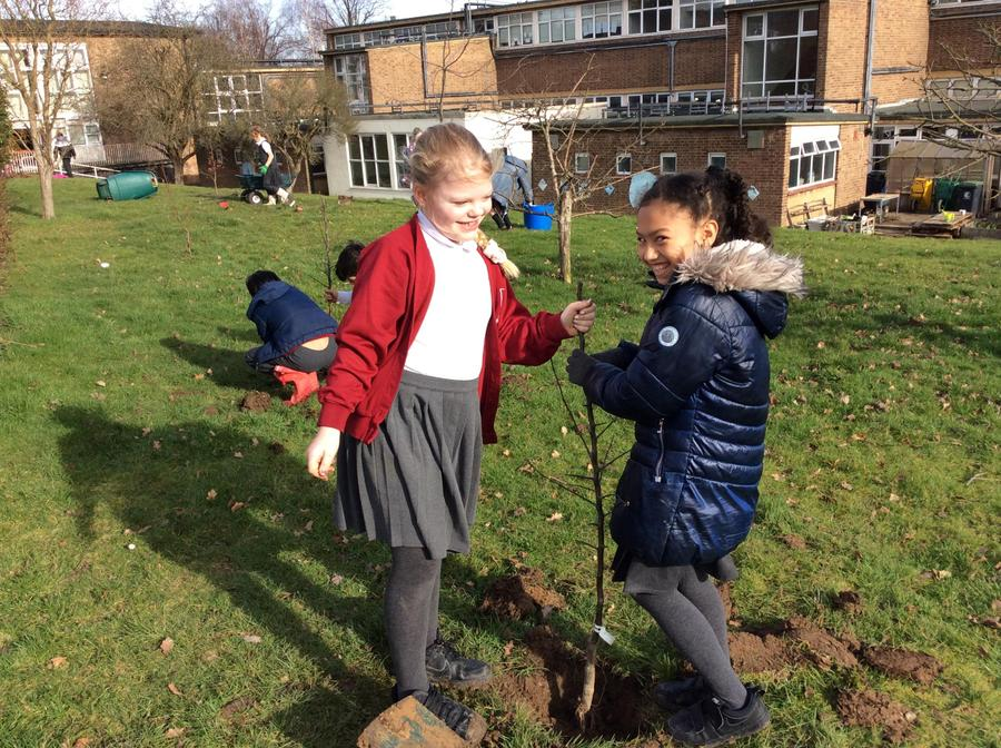 Tree Planting in February