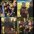 Taking care of the chickens