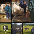 Learning about Cows and Bulls