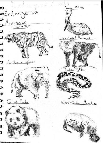 Endangered Animals by William