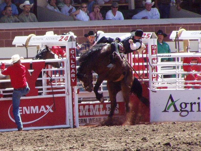 Bucking horse at the Calgary Stampede
