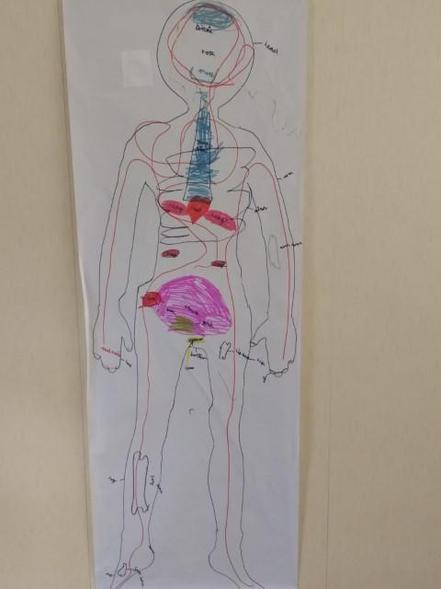 My body: a carefully labelled and coloured diagram