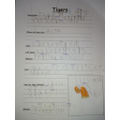 Chloe found tiger facts