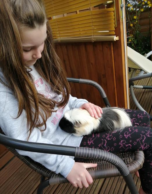 Guinea pig snuggles!