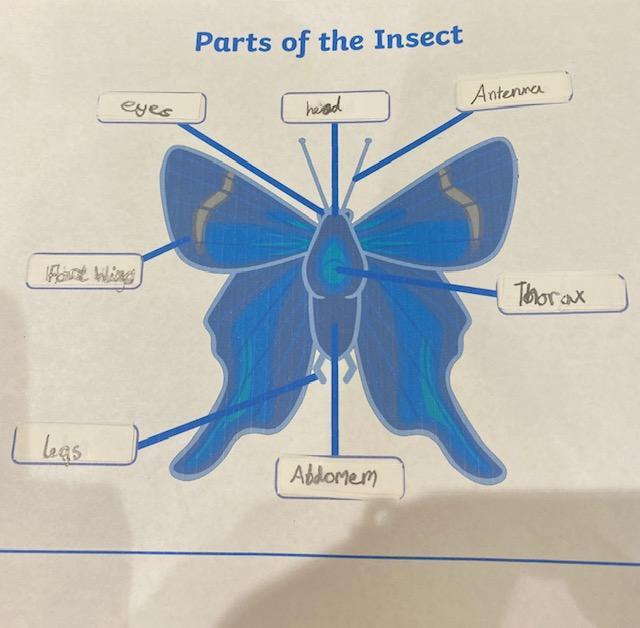 Erin's insect body parts
