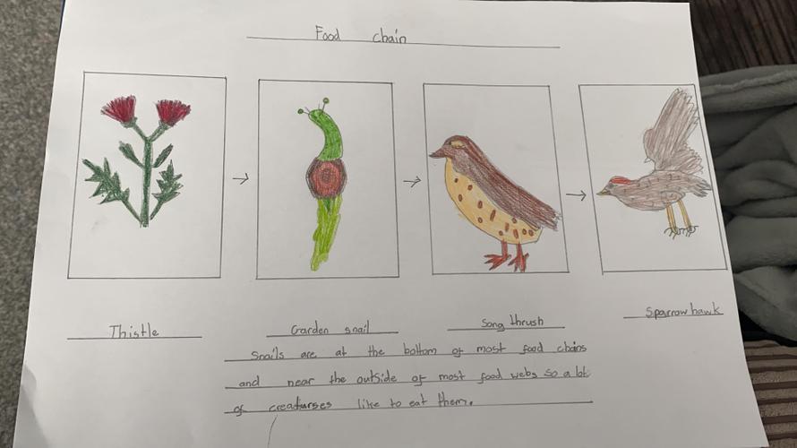 Kyla's food chain