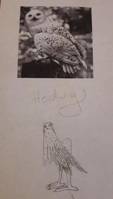 Juliet's Hedwig art