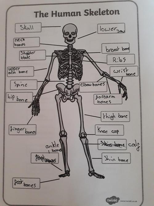 Juliet's skeleton and bone labelling