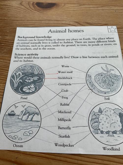 Mason's animal homes