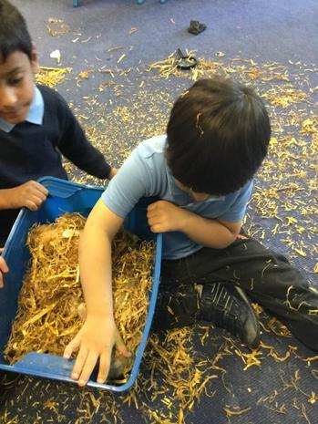 Learning about Hibernation. This was our animal nest.