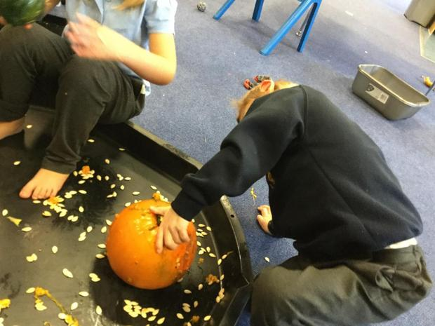 Exploring the pumpkins with all of our senses. The seeds felt cold on our hands and feet a
