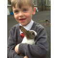 Bringing stories to life. The little grey rabbit.
