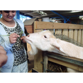 One of our class members feeding a goat!